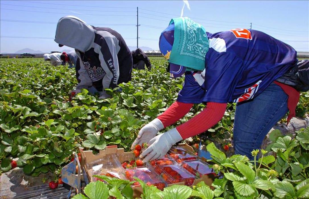 Mujeres marroquíes trabajando en campos de fresas de Huelva