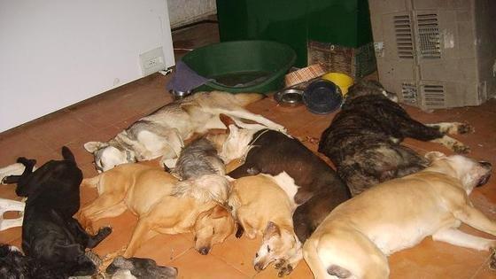 Matanza de perros por la que nadie irá a la cárcel
