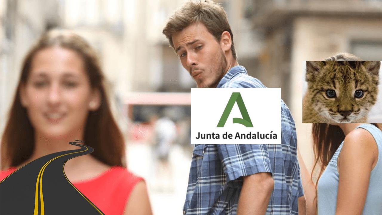 Imagen ilustrativa de la actitud del Gobierno de la Junta de Andalucía ante el lince ibérico y las carreteras