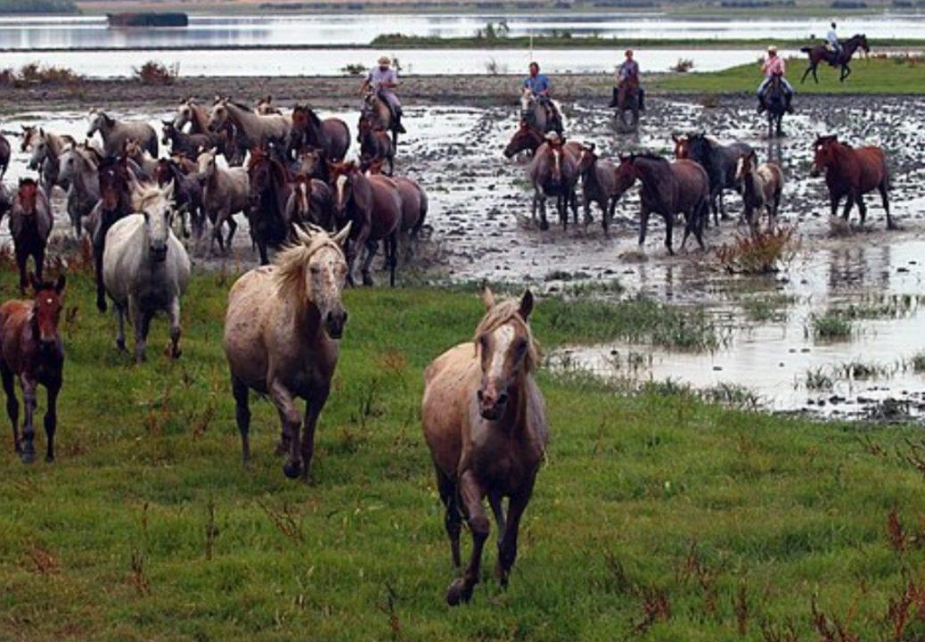 La Junta detecta dos casos de fiebre del Nilo en caballos de Huelva y Cádiz - Imagen ilustrativa