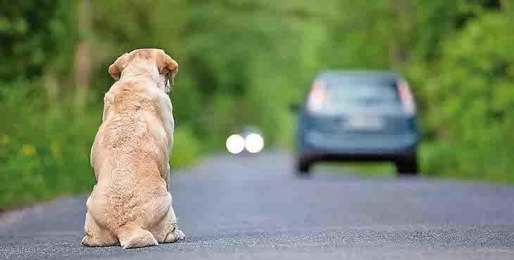 Imagen que denuncia el abandono de perros en la carretera.